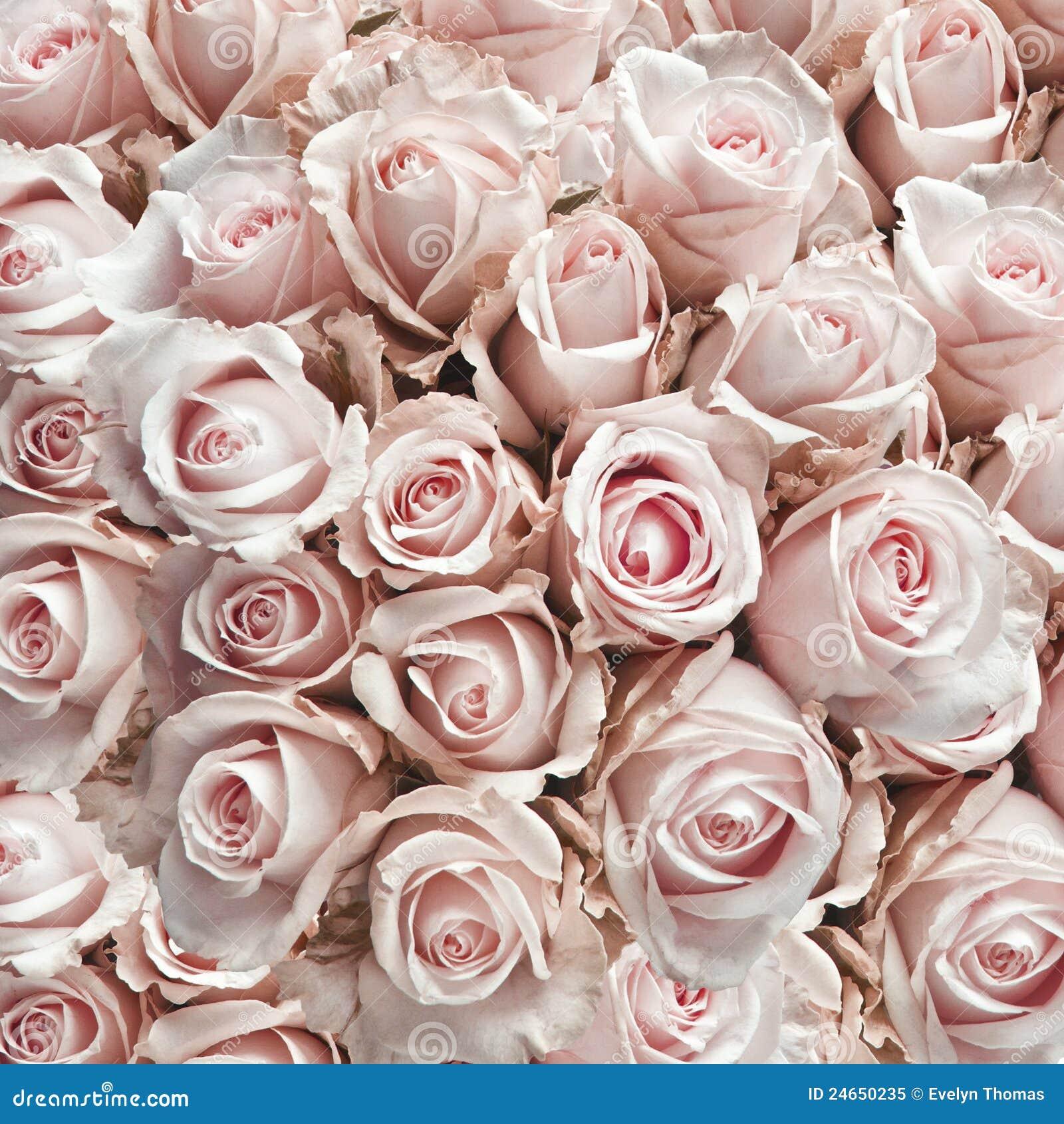pink vintage roses stock image image of arrangement 24650235. Black Bedroom Furniture Sets. Home Design Ideas