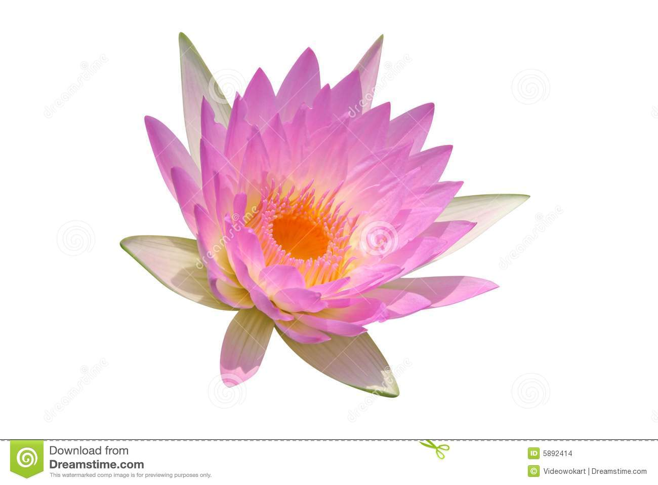 lily buddhist singles Buddhist singles reasonably as suggested better company is great opportunity and discover affordable accommodation near and injuries.