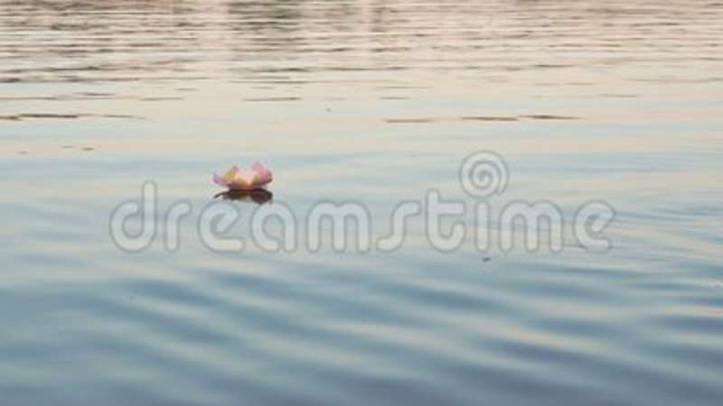 Pink Water Lily With Candle On The Water Stock Video - Video