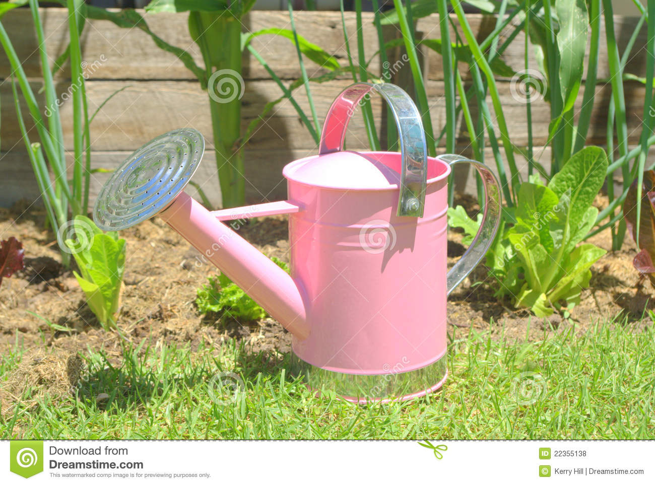 Pink watering can in the vegetable garden royalty free for Watering vegetable garden