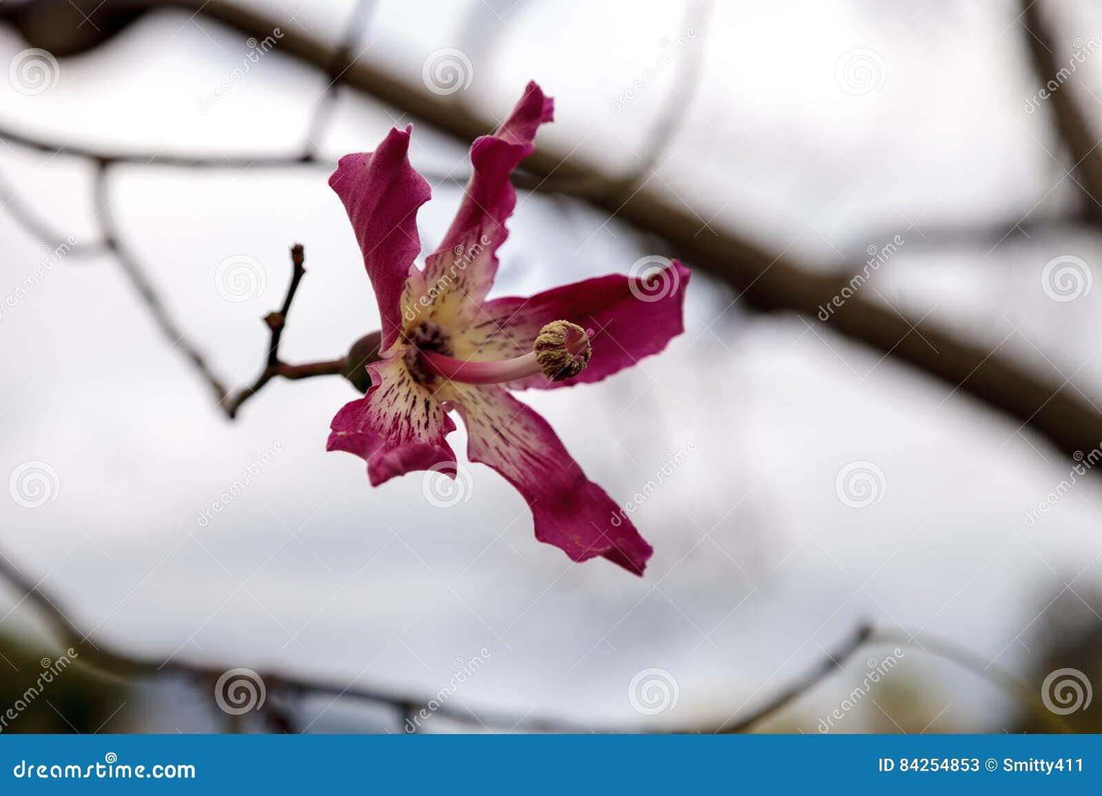 Pink And White Dogwood Flower Stock Image Image Of White Flower