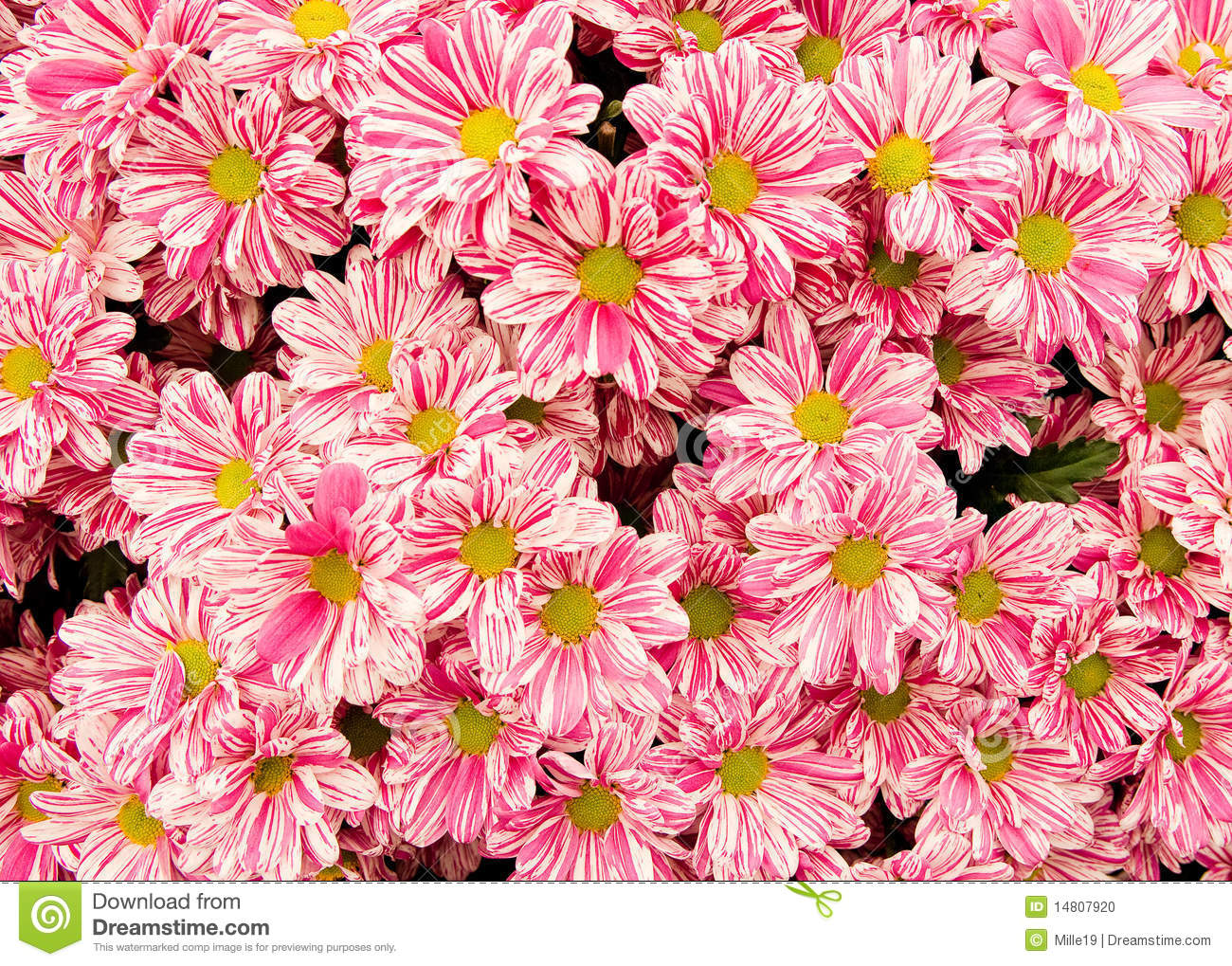 Pink and white flower background stock photo image of pink and white flower background mightylinksfo