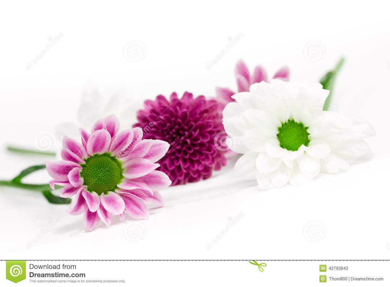 Pink And White Flowers Stock Image Image Of Flower Shop 42793843