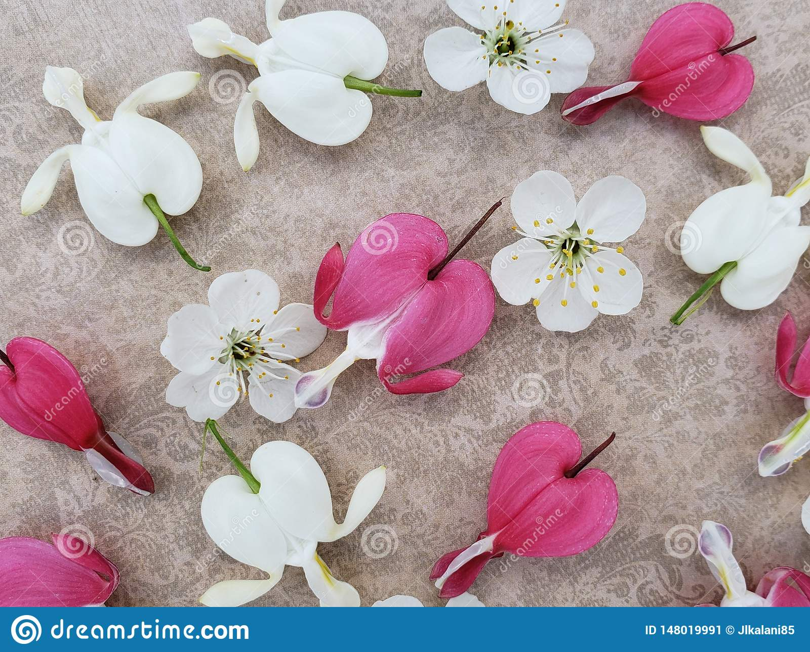 Pink and white bleeding heart flowers with cherry blossoms scattered on romantic background.