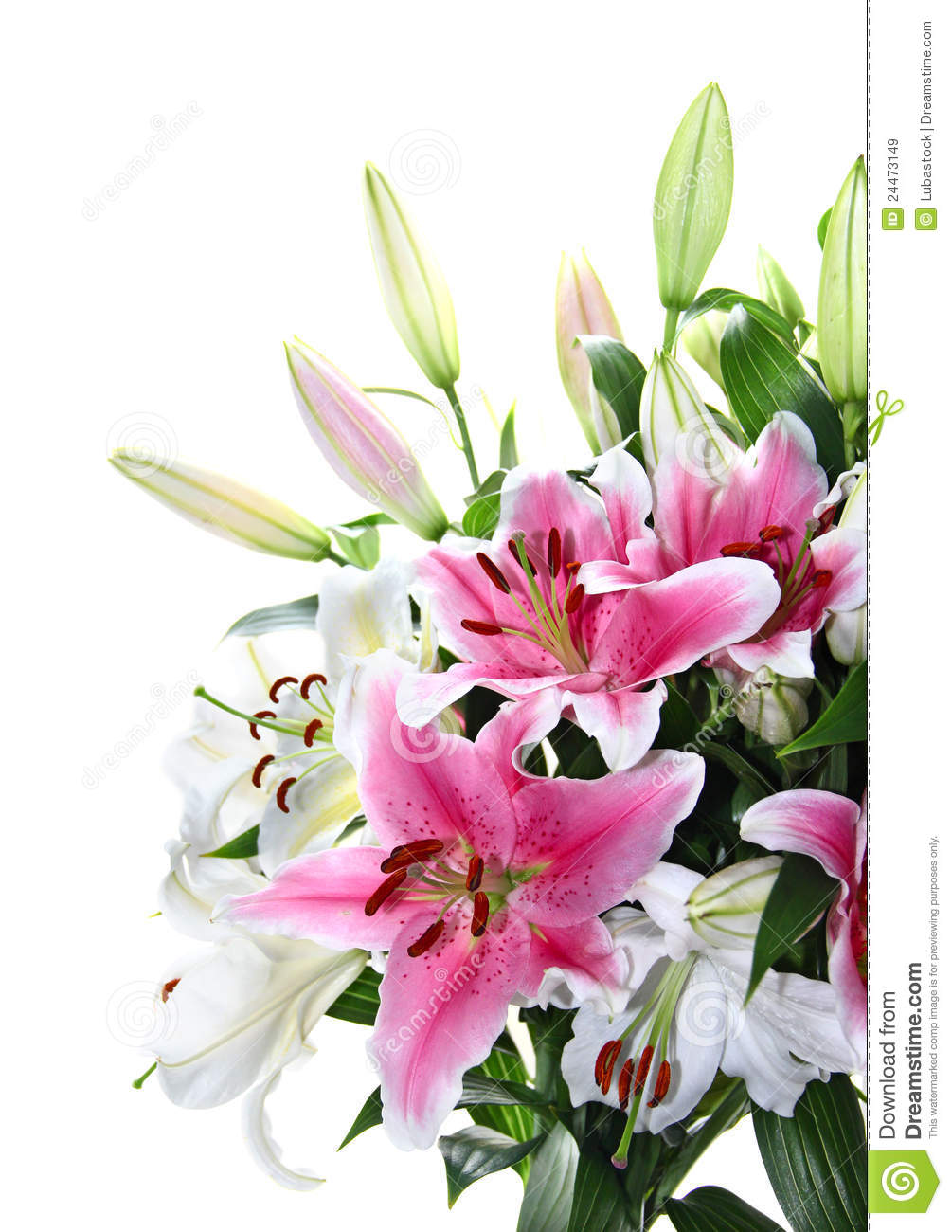 Pink And White Lily Bouquet Closeup Stock Image - Image ...