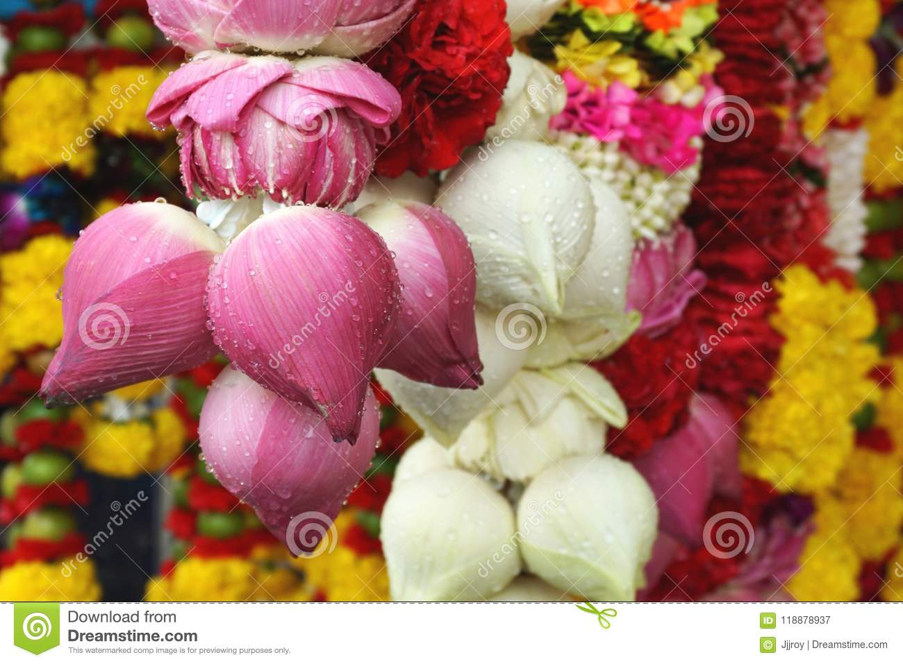 Pink And White Lotus Flower Garlands At A Hindu Temple In Bangkok ...