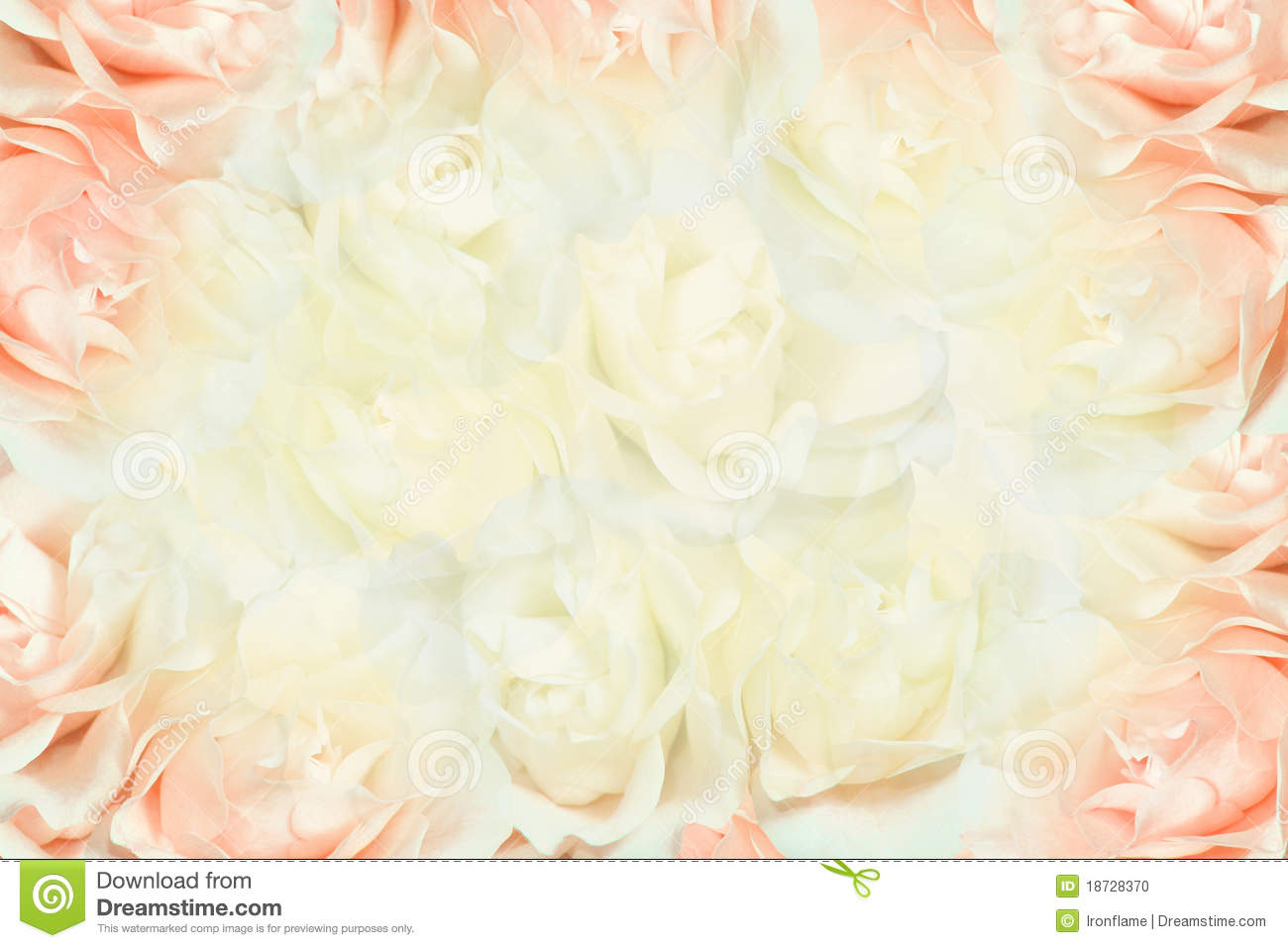 Pink And White Roses Background Stock Photo - Image: 18728370