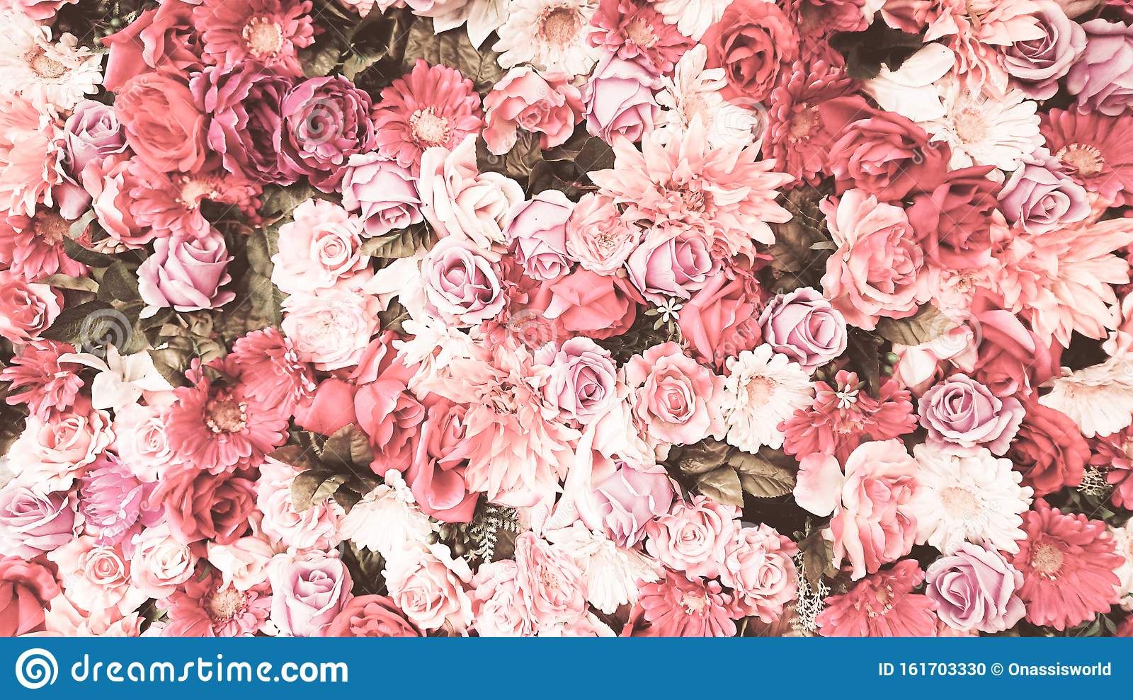 Pink And White Roses Stock Photo Image Of Adore Female 161703330