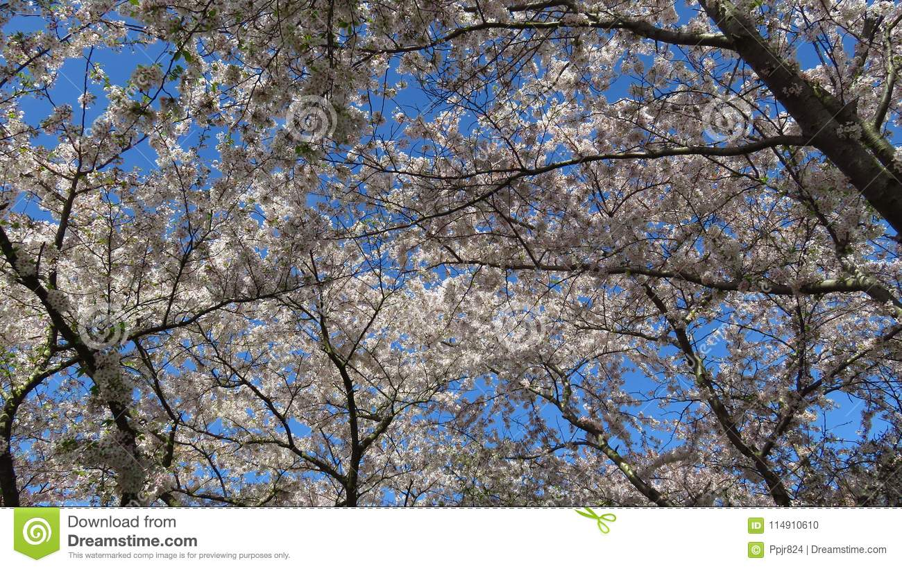 Pink And White Spring Blooming Trees Stock Photo Image Of Fall