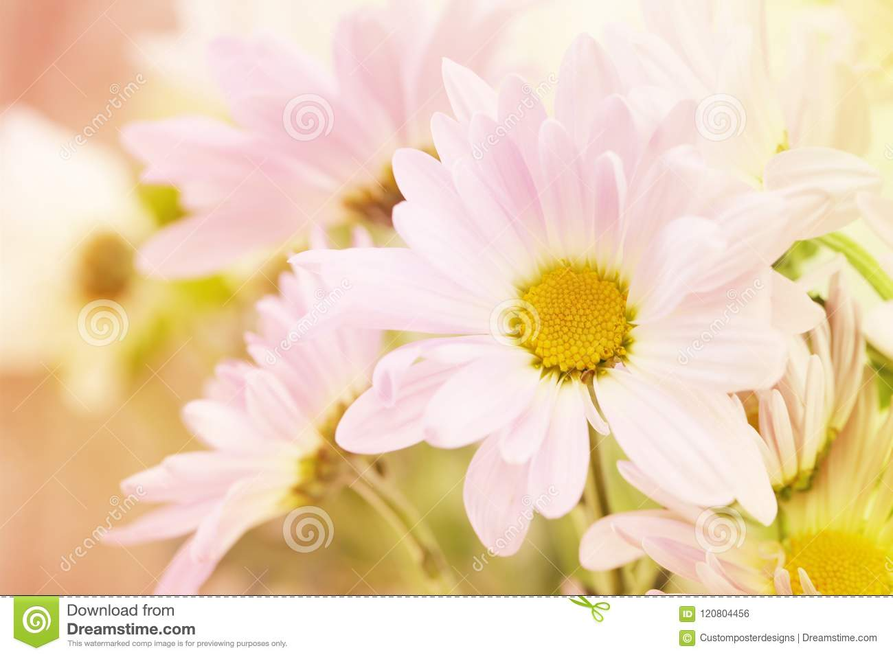Download A flower saying hello. stock photo. Image of beauty - 120804456