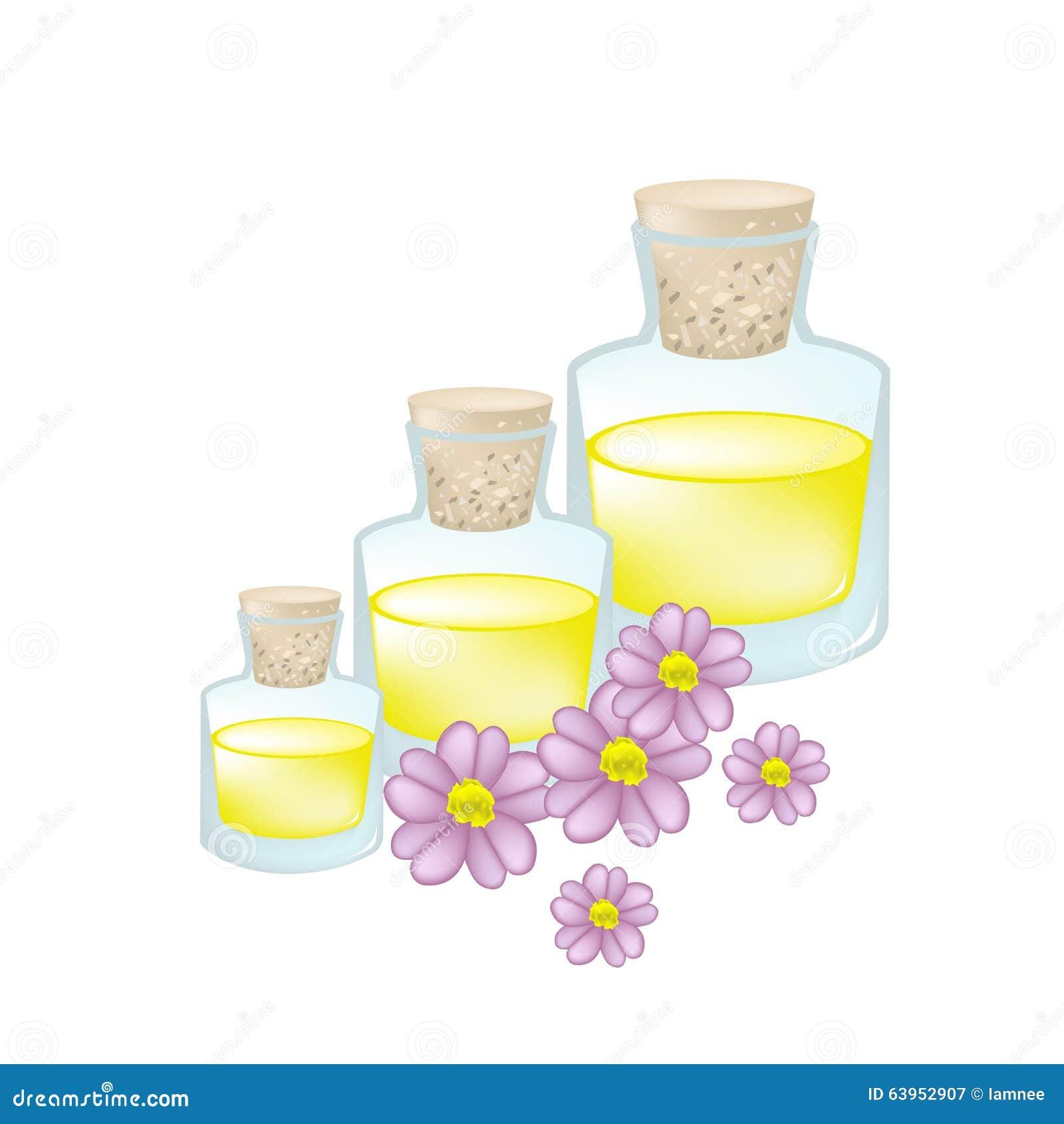 Pink Yarrow Or Achillea Millefolium With Essential Oil Stock Vector