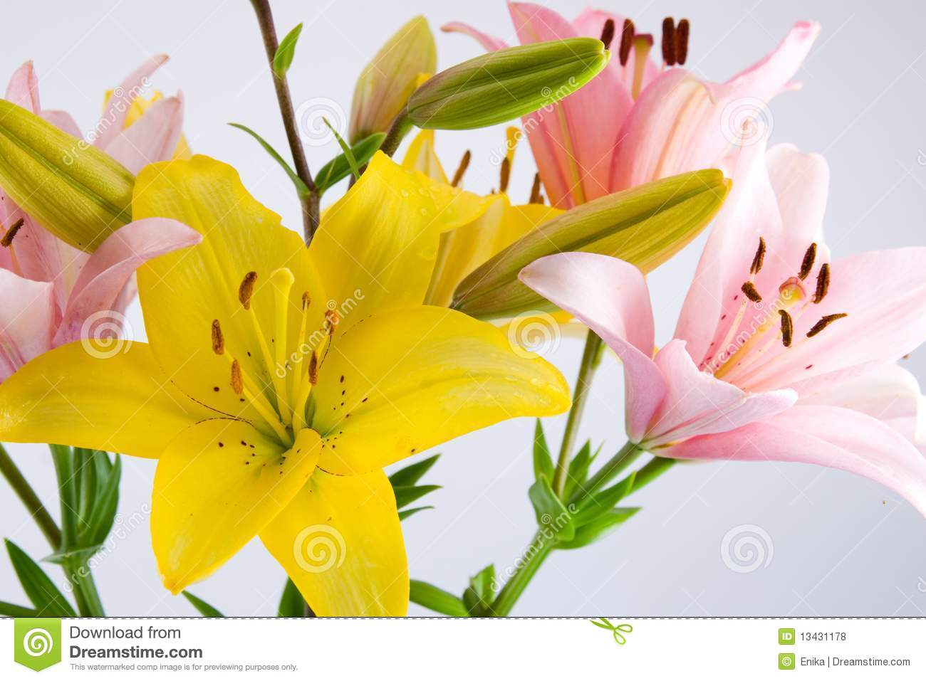 Pink And Yellow Flowers Stock Photo Image Of Isolated 13431178