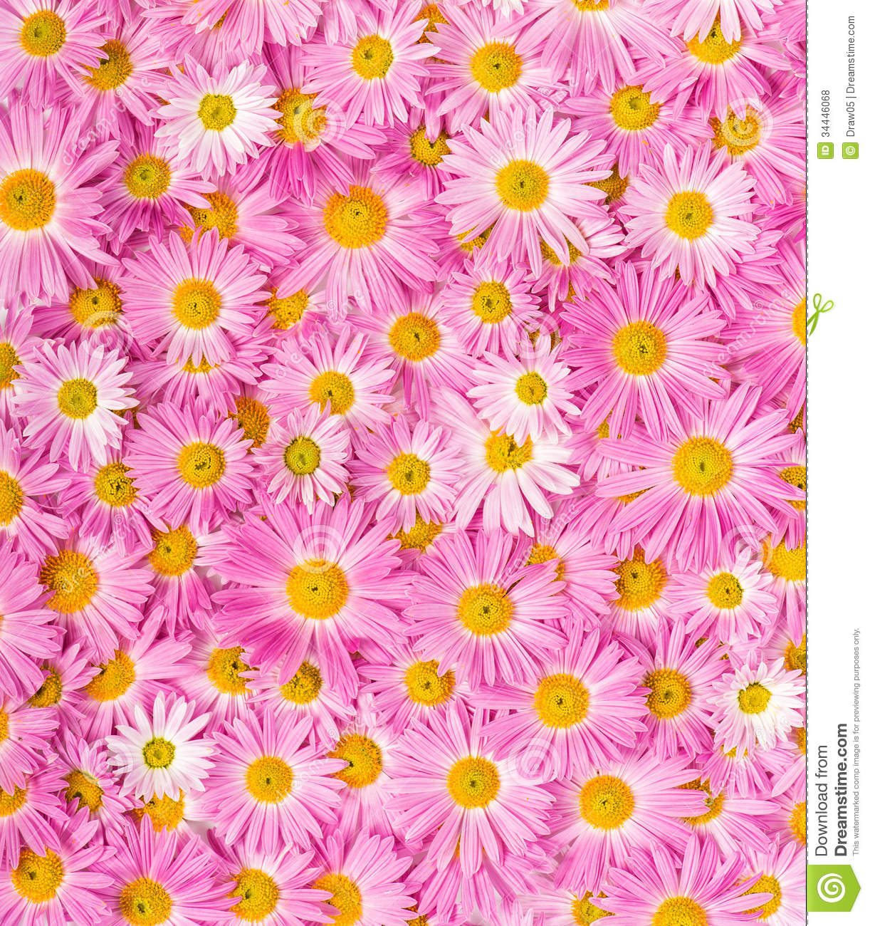 Pink And Yellow Flowers Royalty Free Stock Photos - Image ...