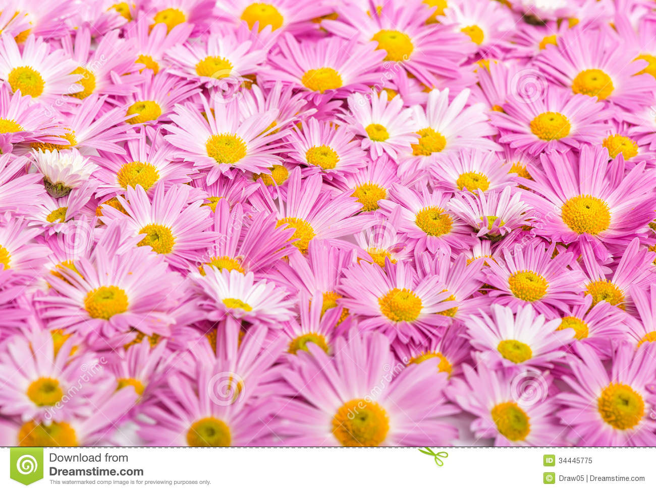pink and yellow flowers background royalty free stock