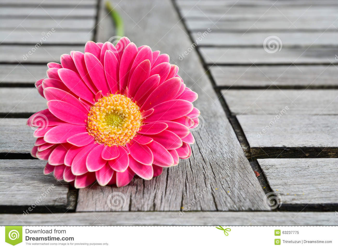 Pink Yellow Gerbera Daisies On Grey Old Wooden Shelves ...