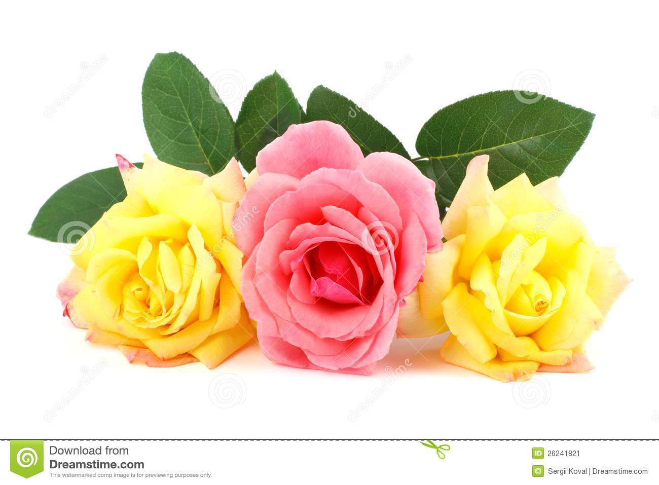 Clipart Yellow Roses Pink And Yellow Roses Stock Image
