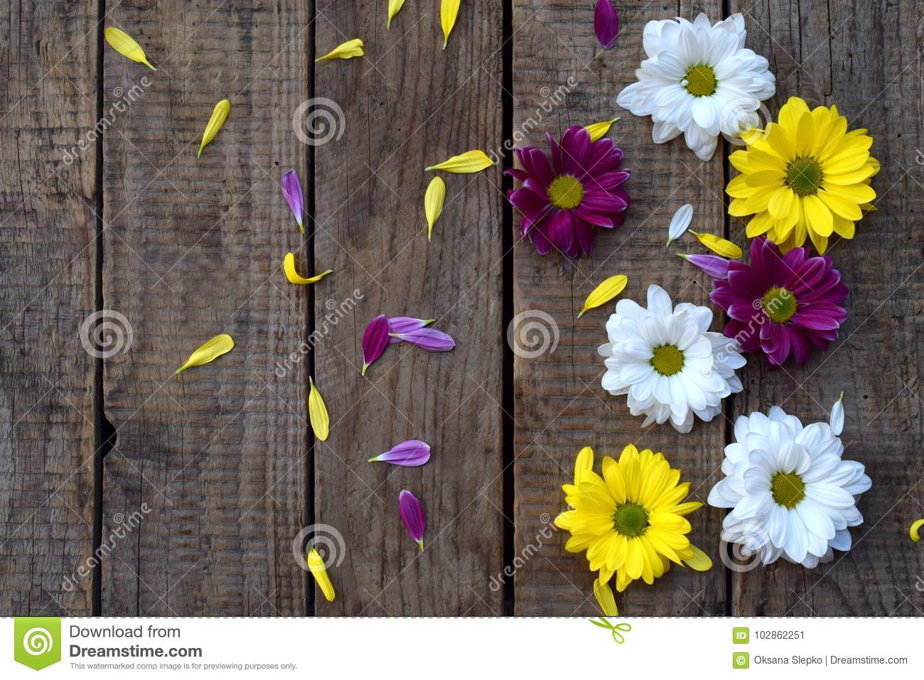 Pink Yellow And White Chamomile Flowers Border Birthday Mothers