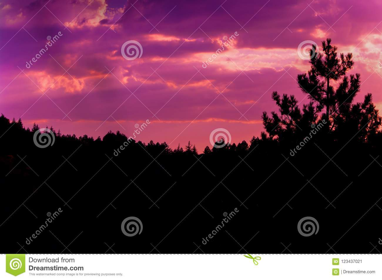 Pinkish sunset sky and clouds photo at pine forest