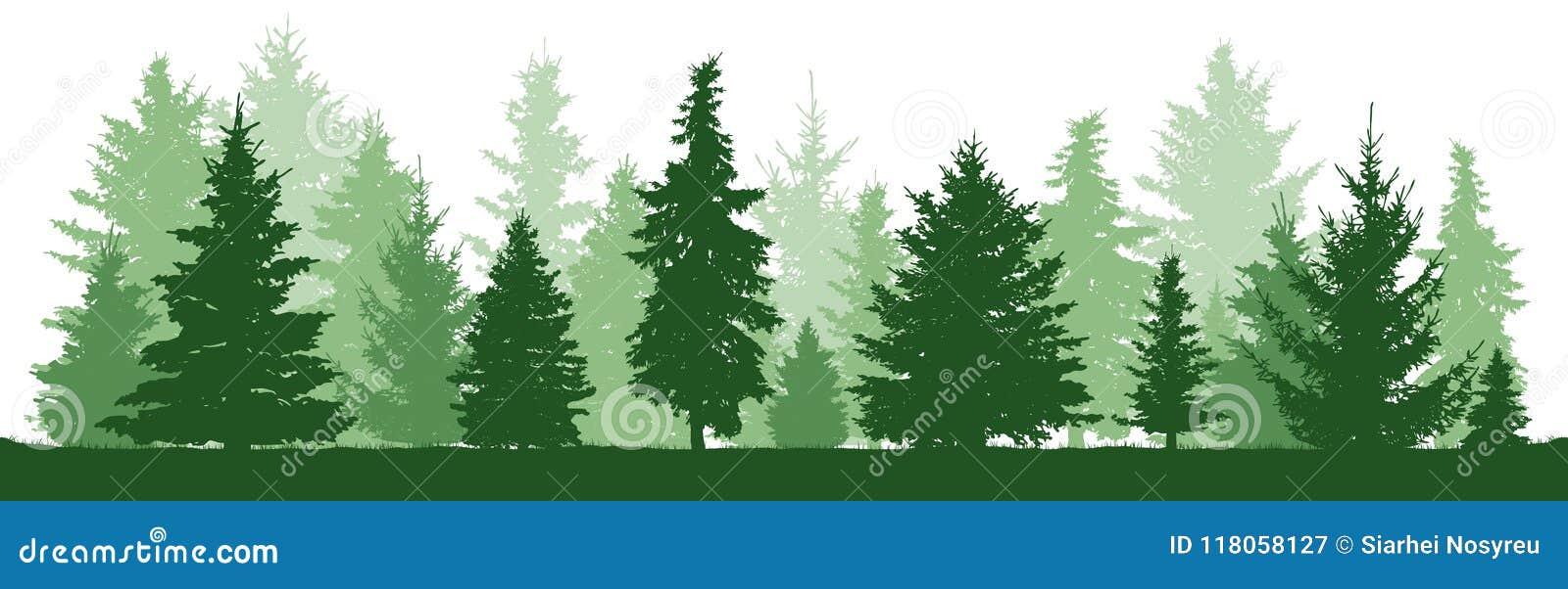 Pino degli alberi, abete, abete rosso, albero di Natale Foresta di conifere, siluetta di vettore