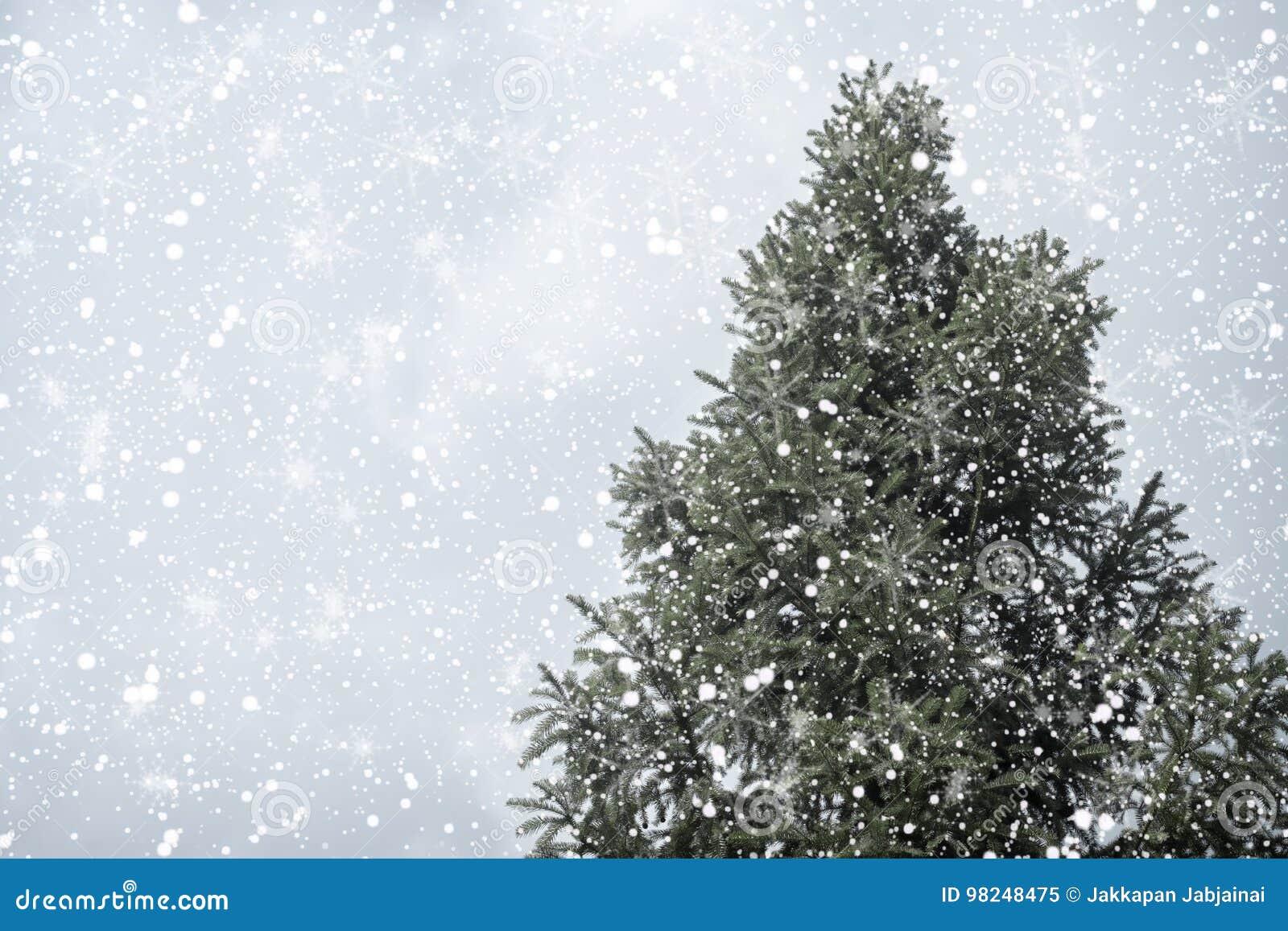 Albero Di Natale Pino O Abete.Pino O Abete Dell Albero Di Natale Con Le Precipitazioni Nevose Sul Fondo Del Cielo Nell Inverno Immagine Stock Immagine Di Parco Luci 98248475