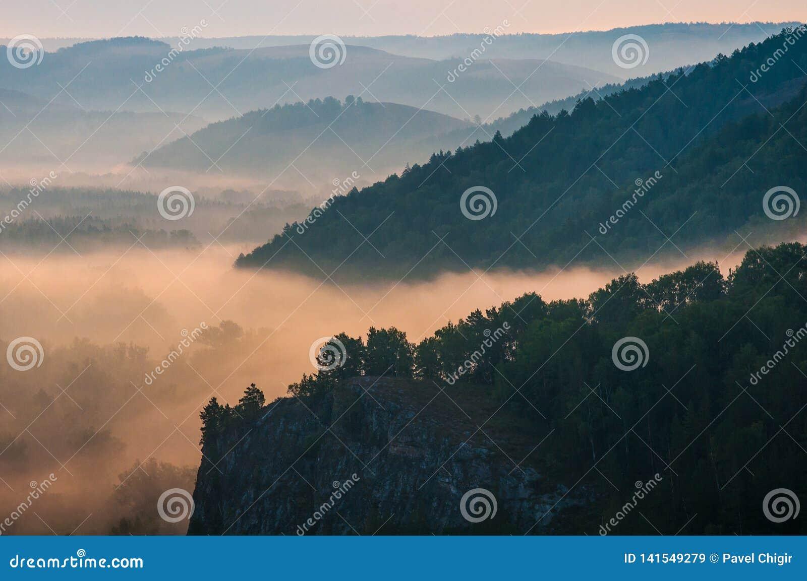 Pinos cubiertos en nieblas en los rayos del amanecer