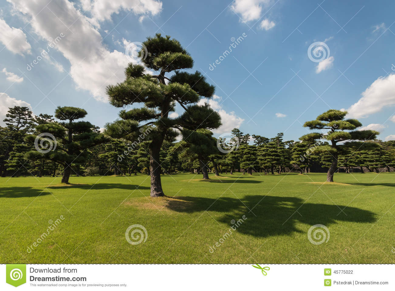Pinos japoneses