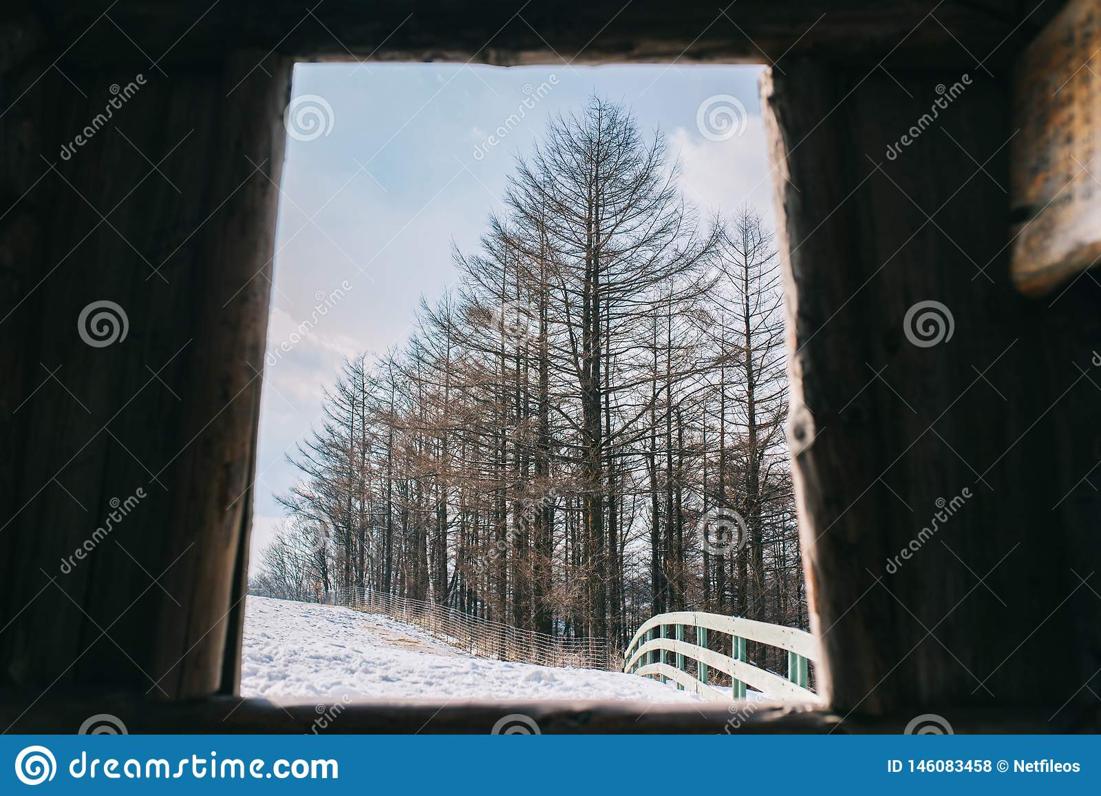 Pins en hiver chez Daegwallyeong, Corée du Sud