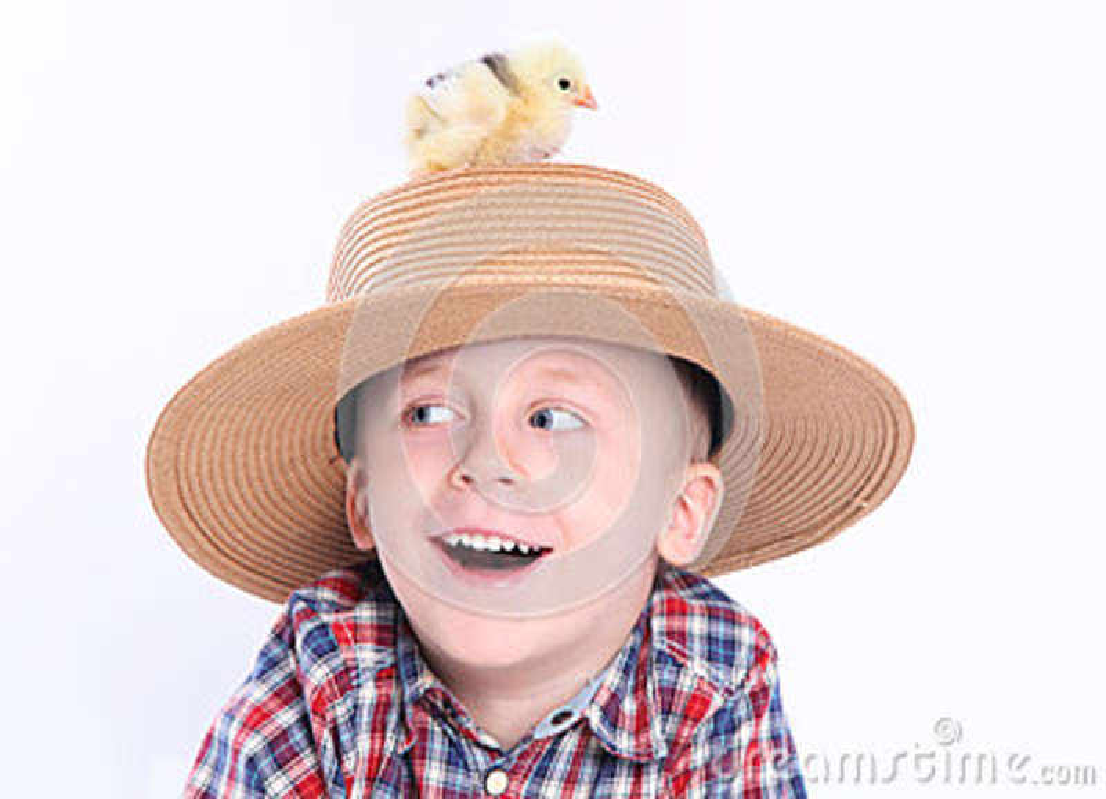 Pintainho no chapéu