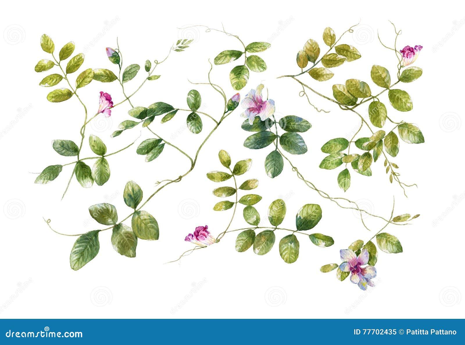 Pintura da aquarela das folhas e da flor