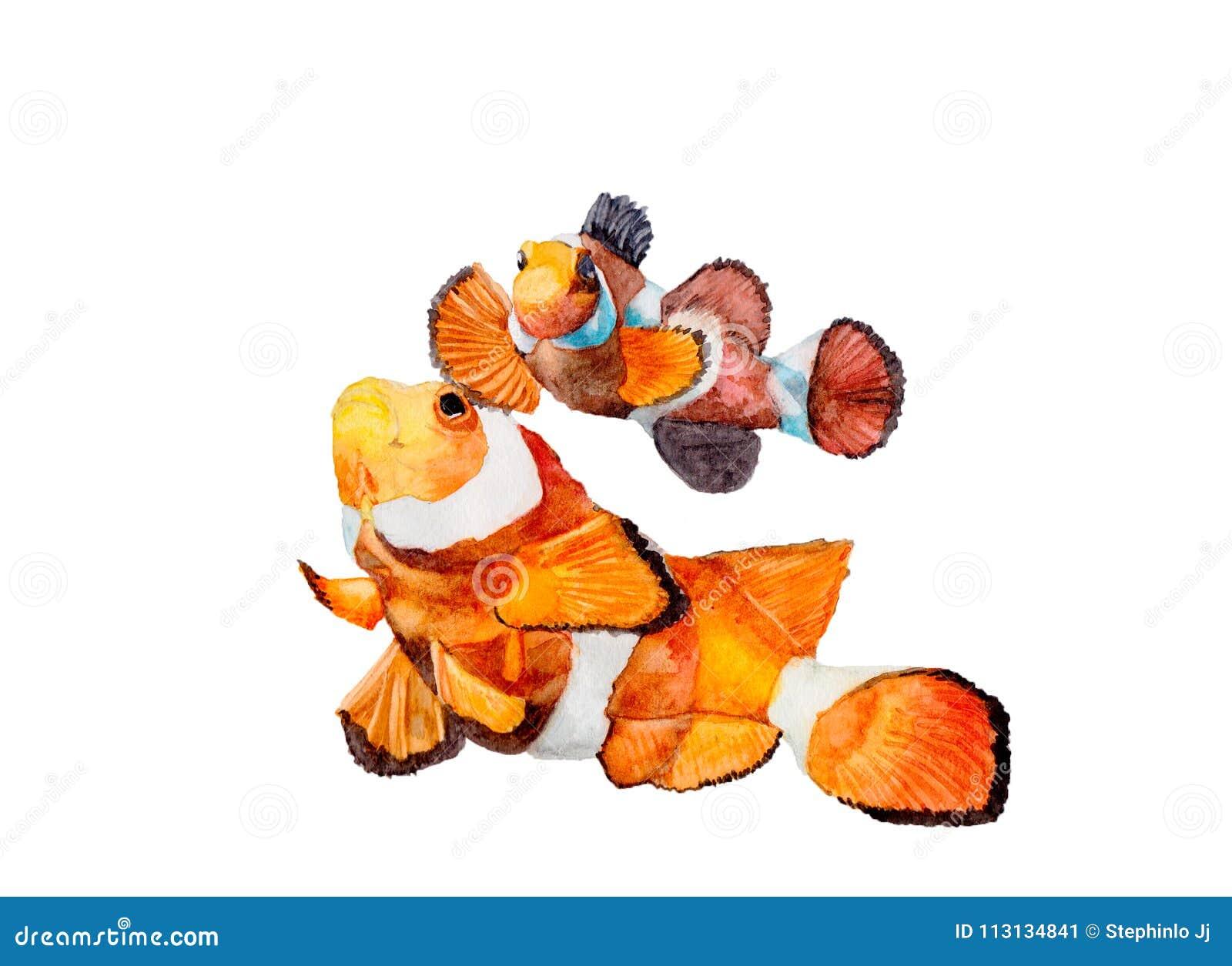Pintura De Nemo Watercolor Ejemplos Animales Lindos Pintados