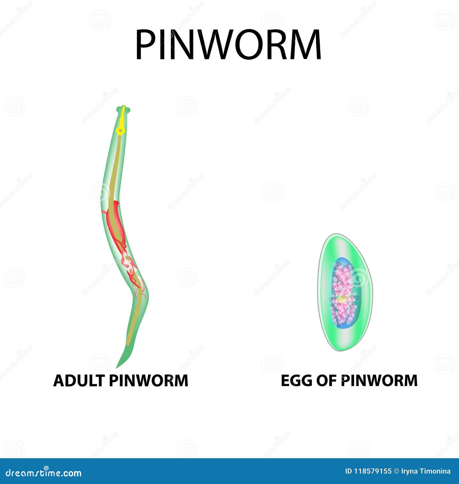 Miért veszélyes a pinworms? Pinworm vektorok