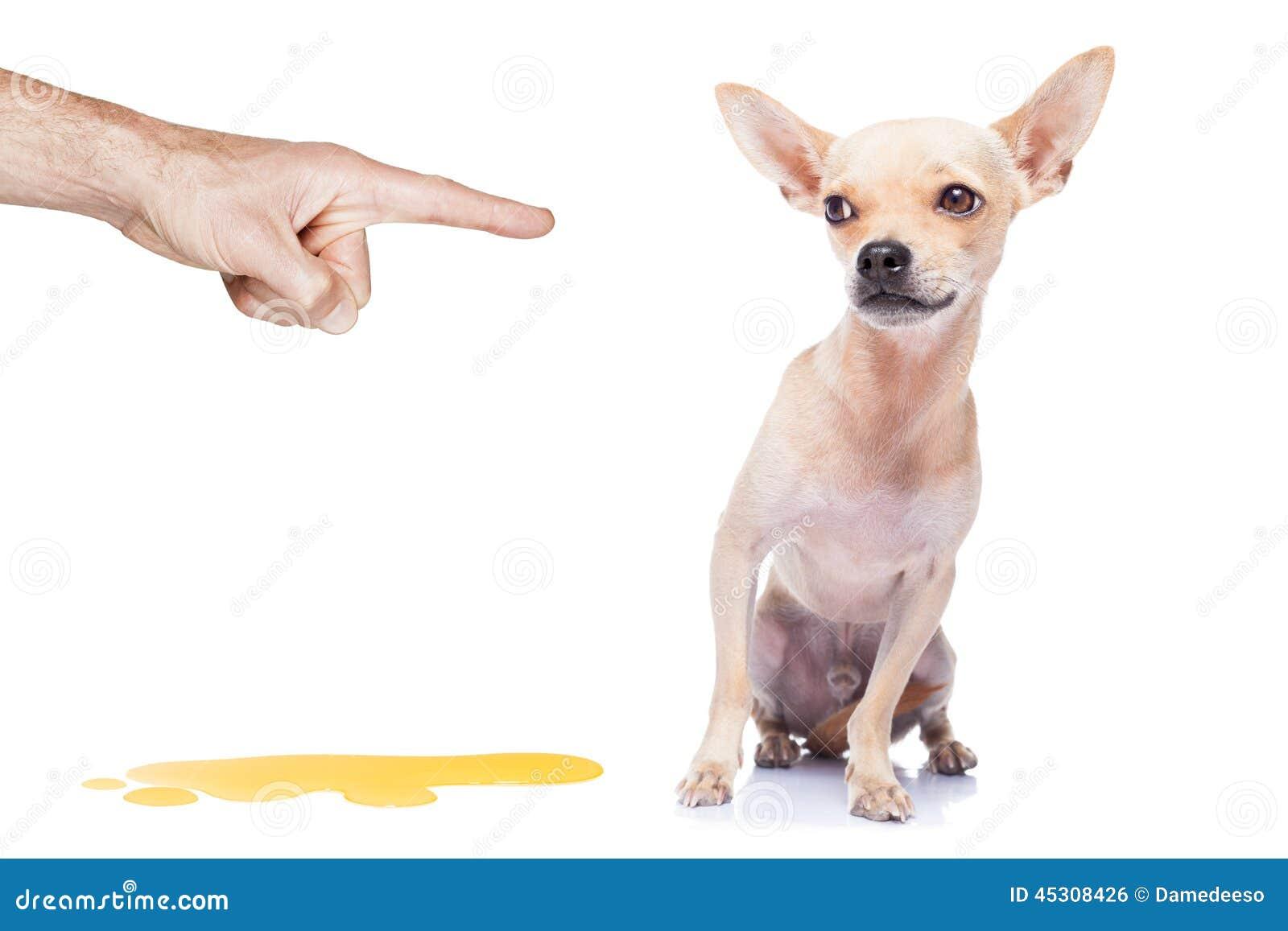 Pipi de chien photo stock image du puni doigt f ch for Pipi de chien sur carrelage