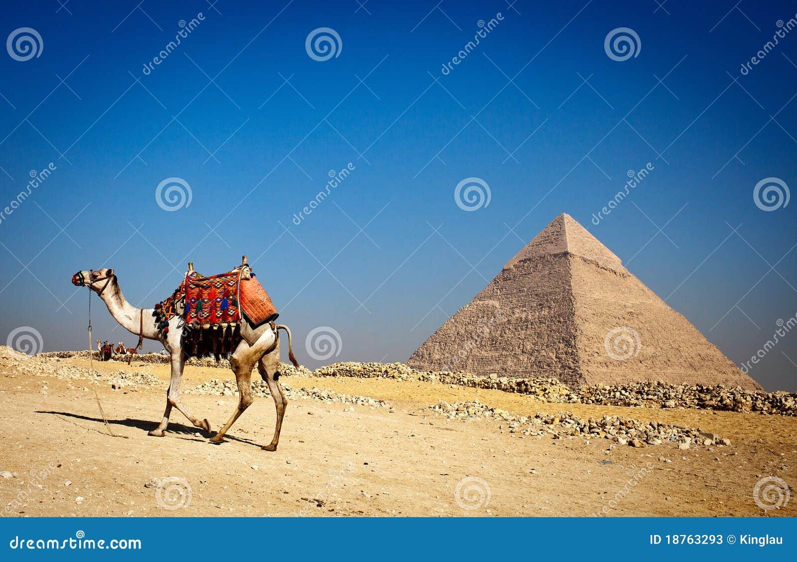 Pirámide sola y camello solo