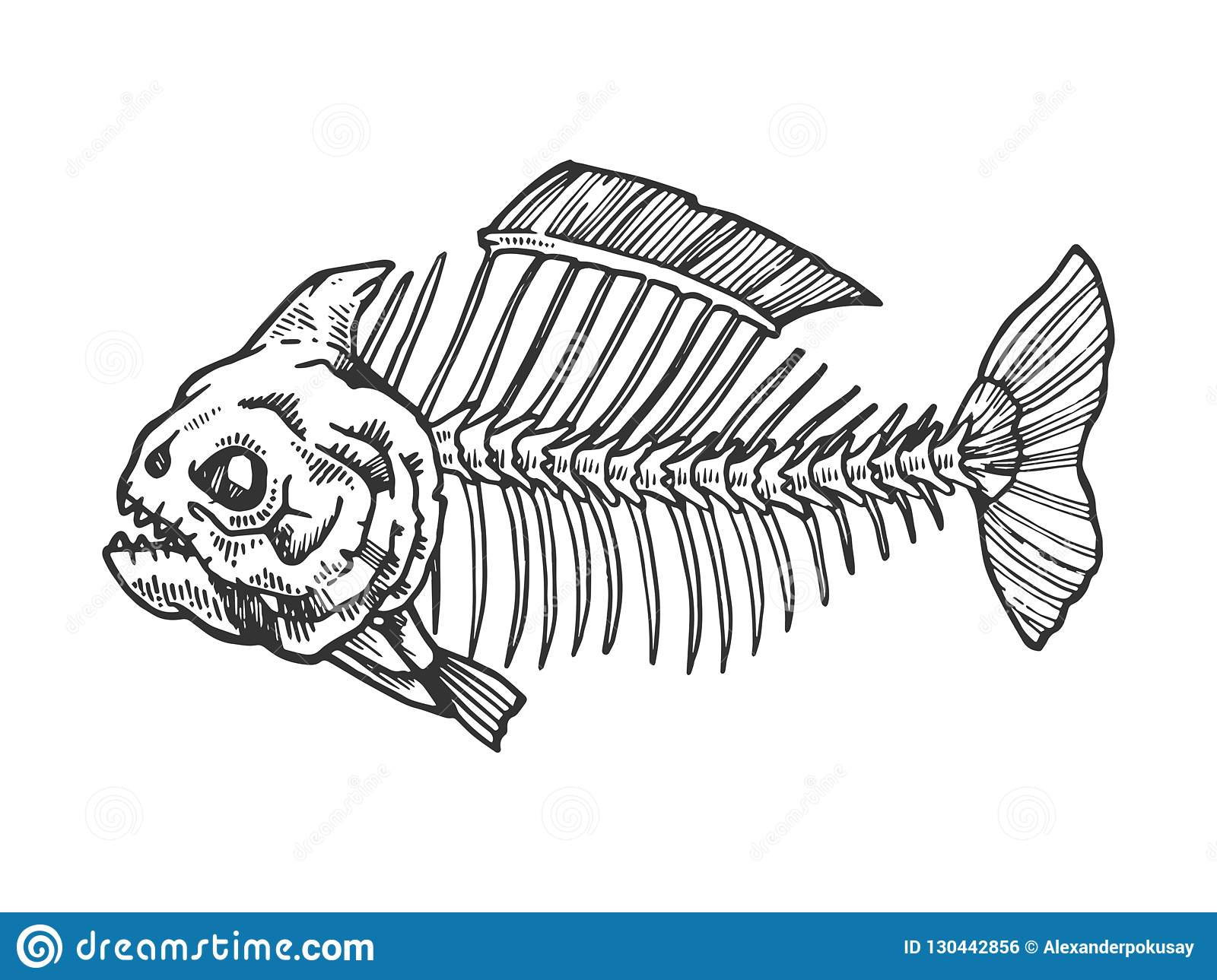 Piranha Fish Skeleton Engraving Vector Stock Vector Illustration