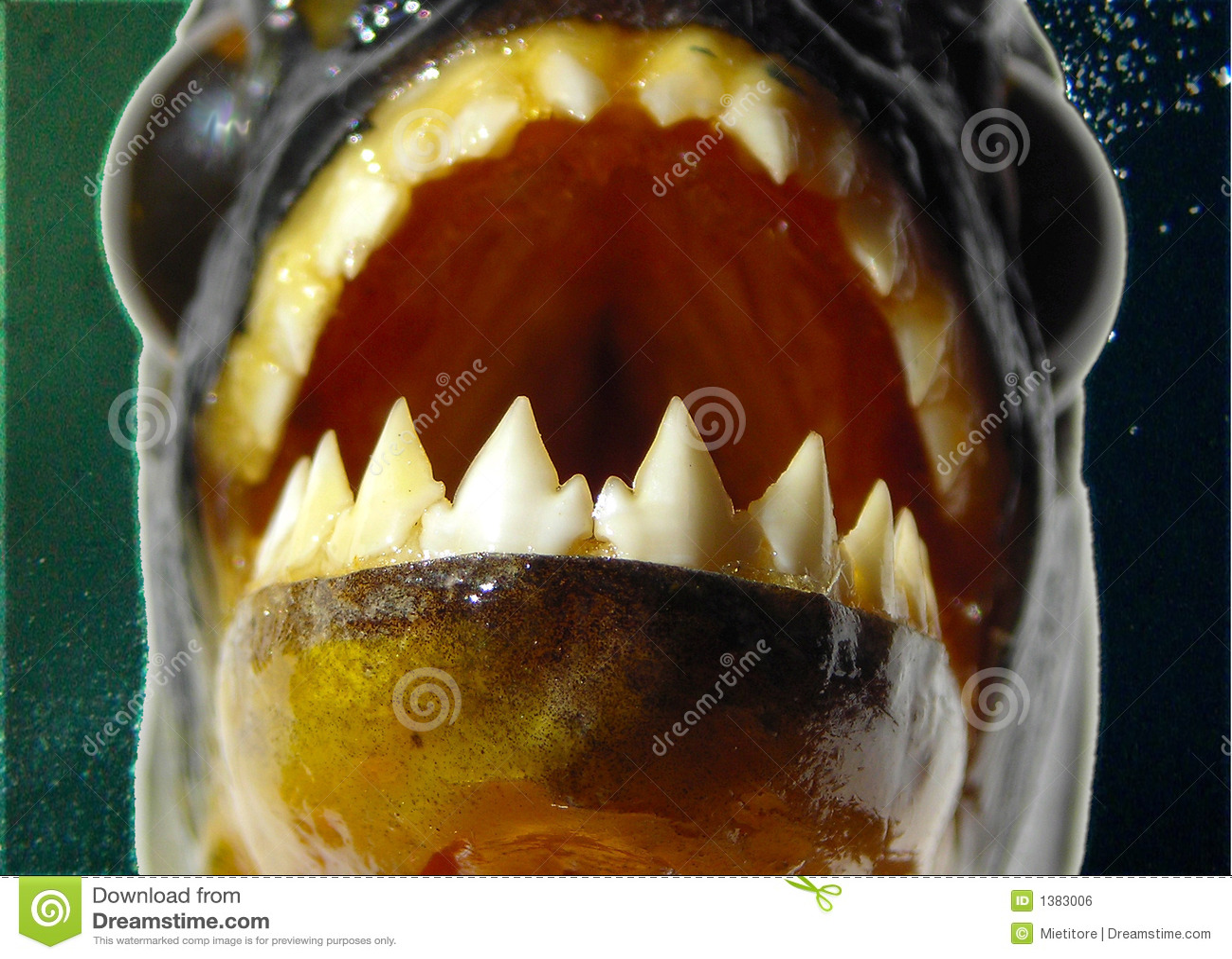 Piranha - Teeth Closeup Royalty Free Stock Image - Image: 1383006