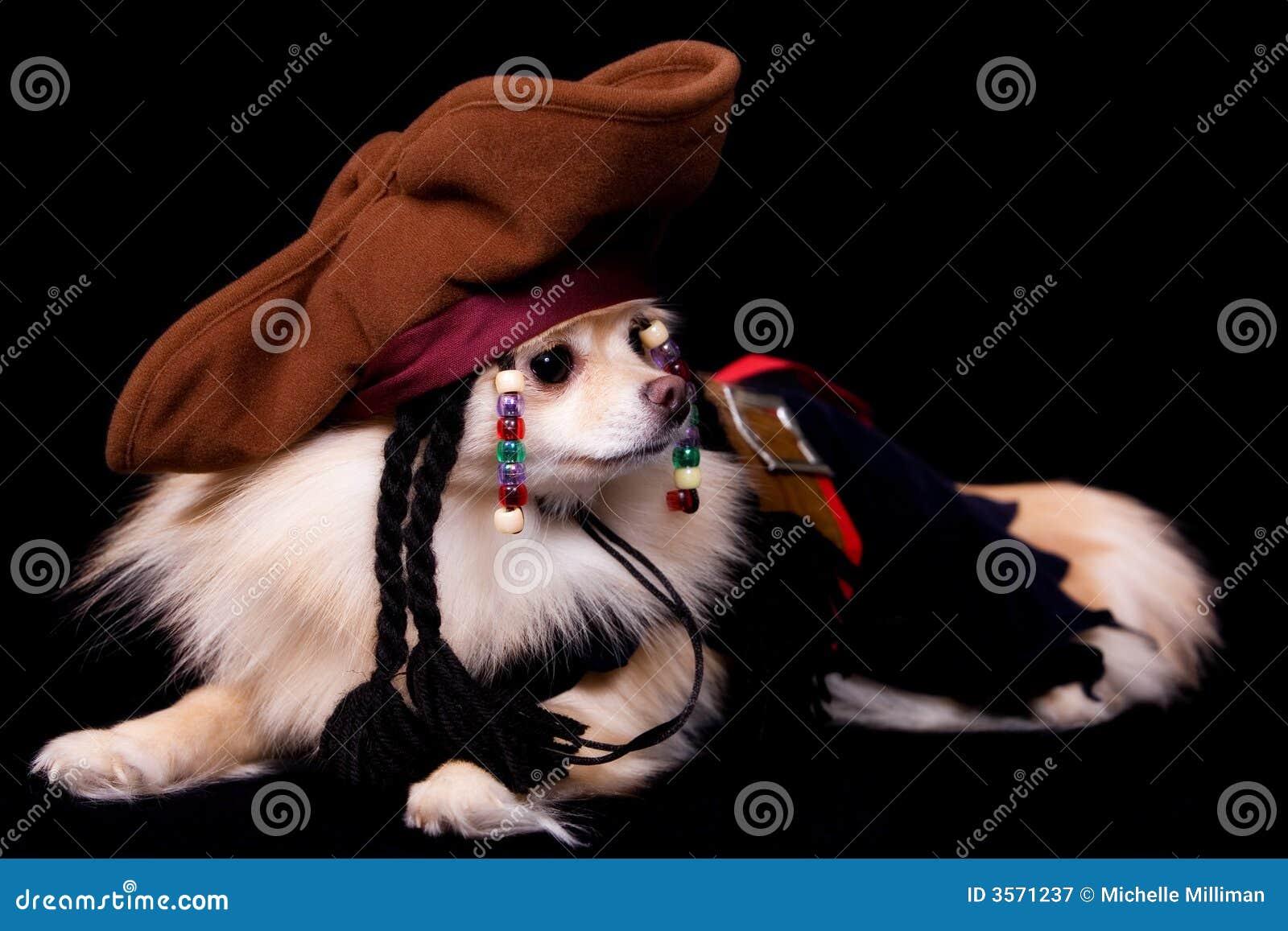 Pirata di Pomeranian
