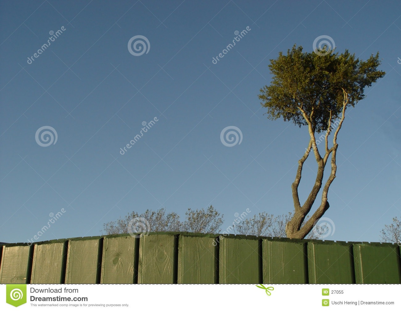 Piratenbaum