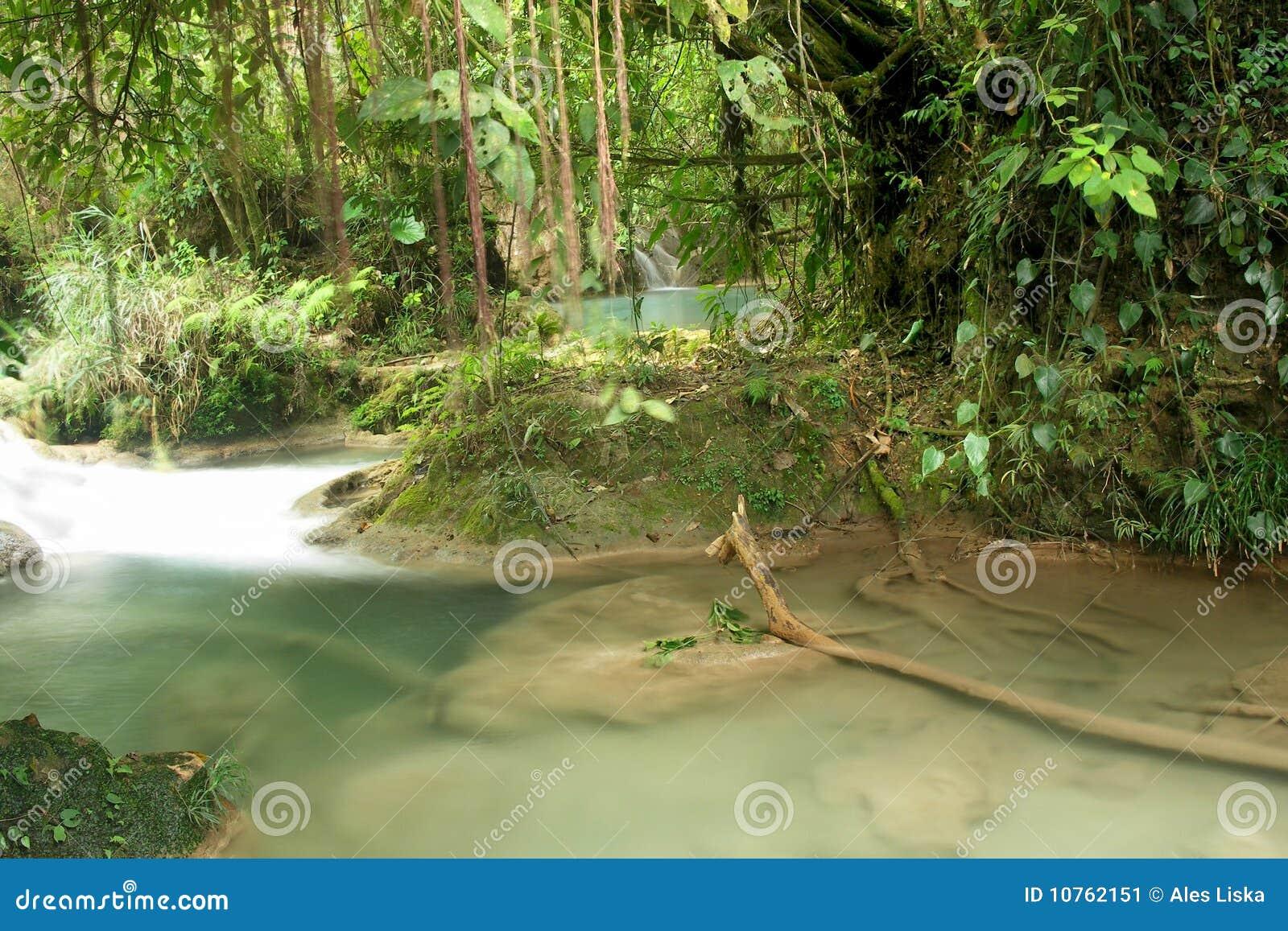 Piscina secreta en la selva tropical agua azul m xico for Piscina la selva