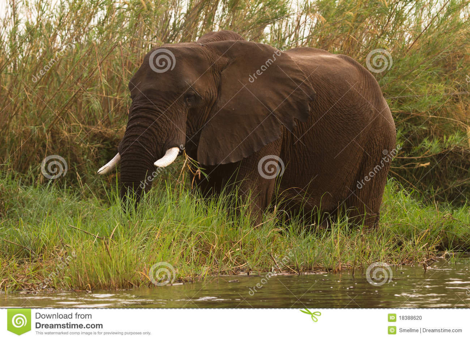 Piscinas de Mana del safari