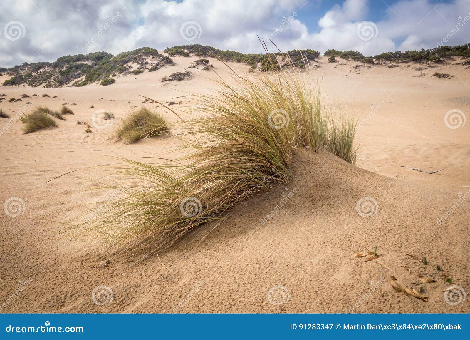 Piscinas stranddyn och vågor i den gröna kusten, Sardinia