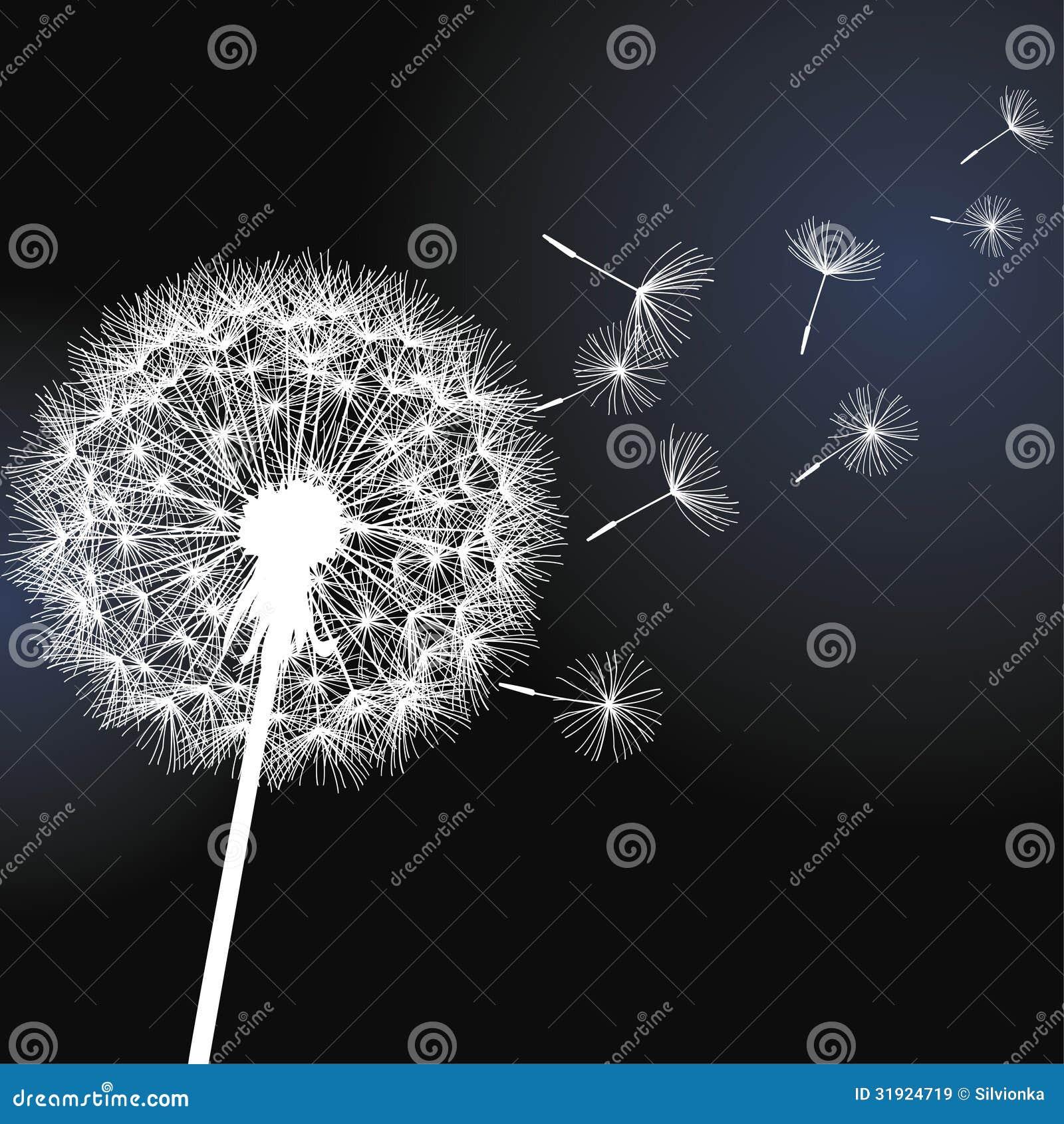 pissenlit de fleur sur le fond noir images libres de droits image 31924719. Black Bedroom Furniture Sets. Home Design Ideas