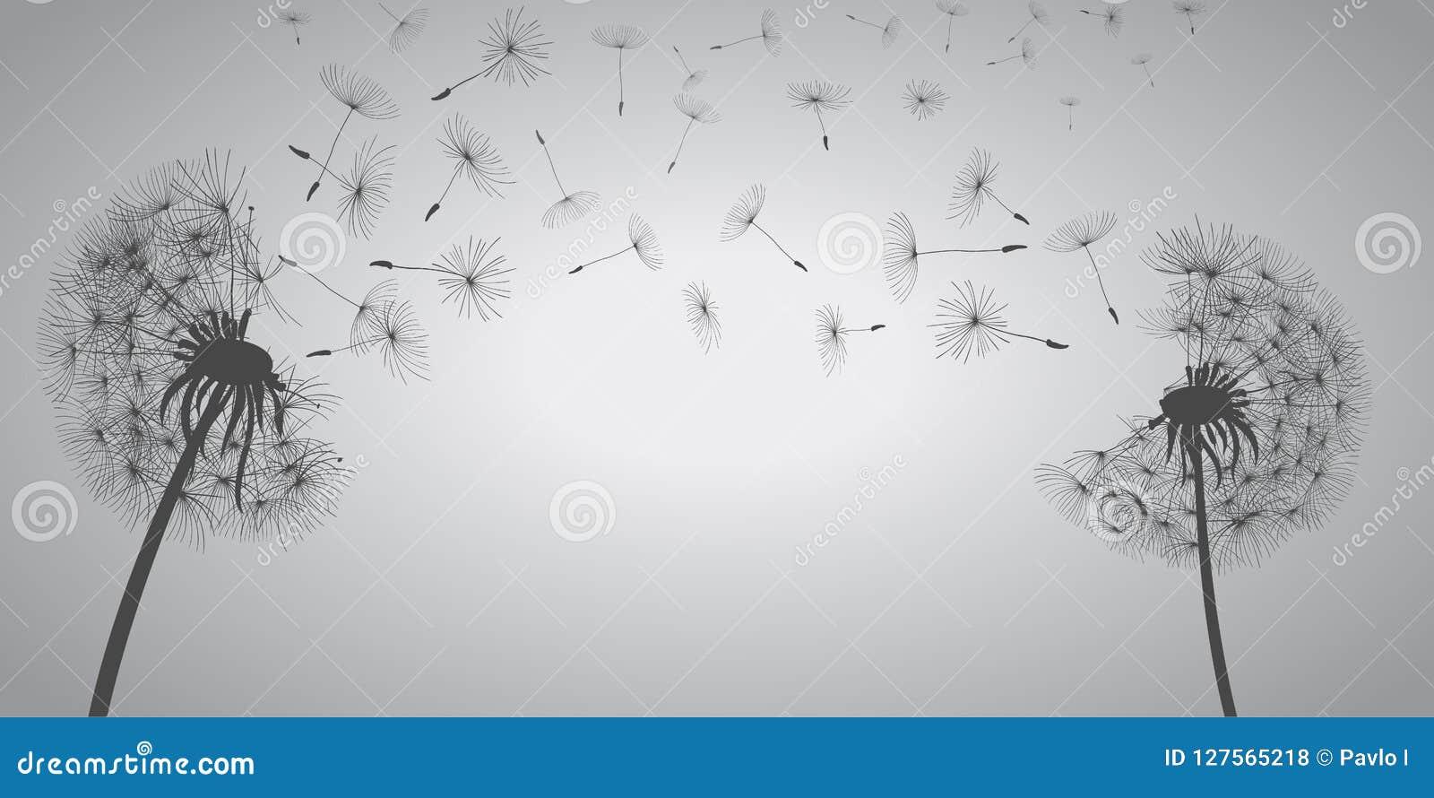 Pissenlits blancs abstraits, pissenlit avec des graines de vol - vecteur