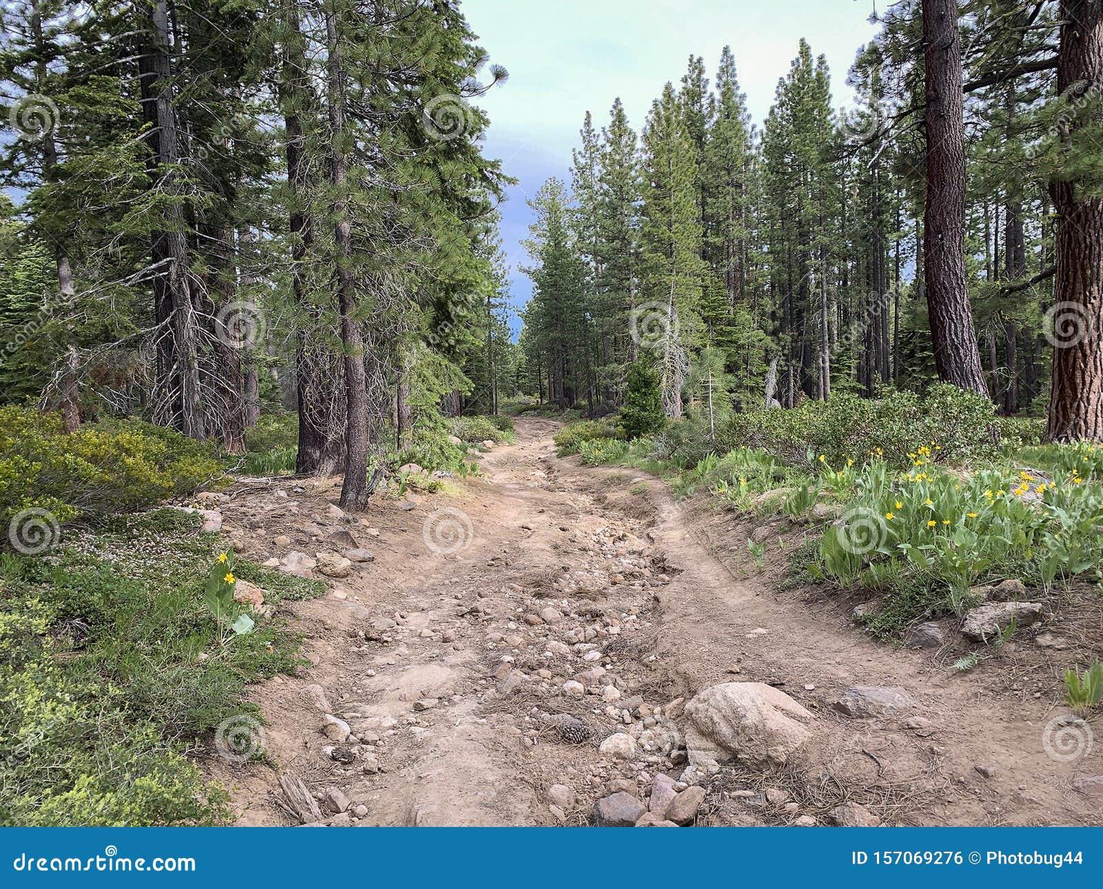 Pista De Ciclismo De Montaa A En Los Bosques De California Foto De Archivo Imagen De Verde Escenico 157069276