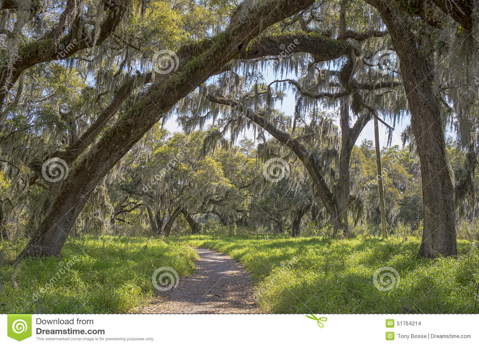Pista de senderismo de la naturaleza