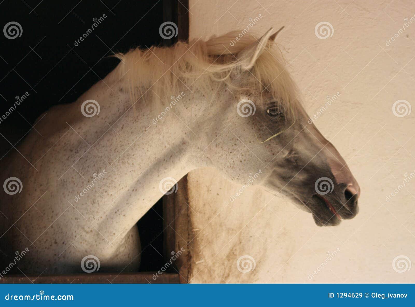 Pista de un caballo