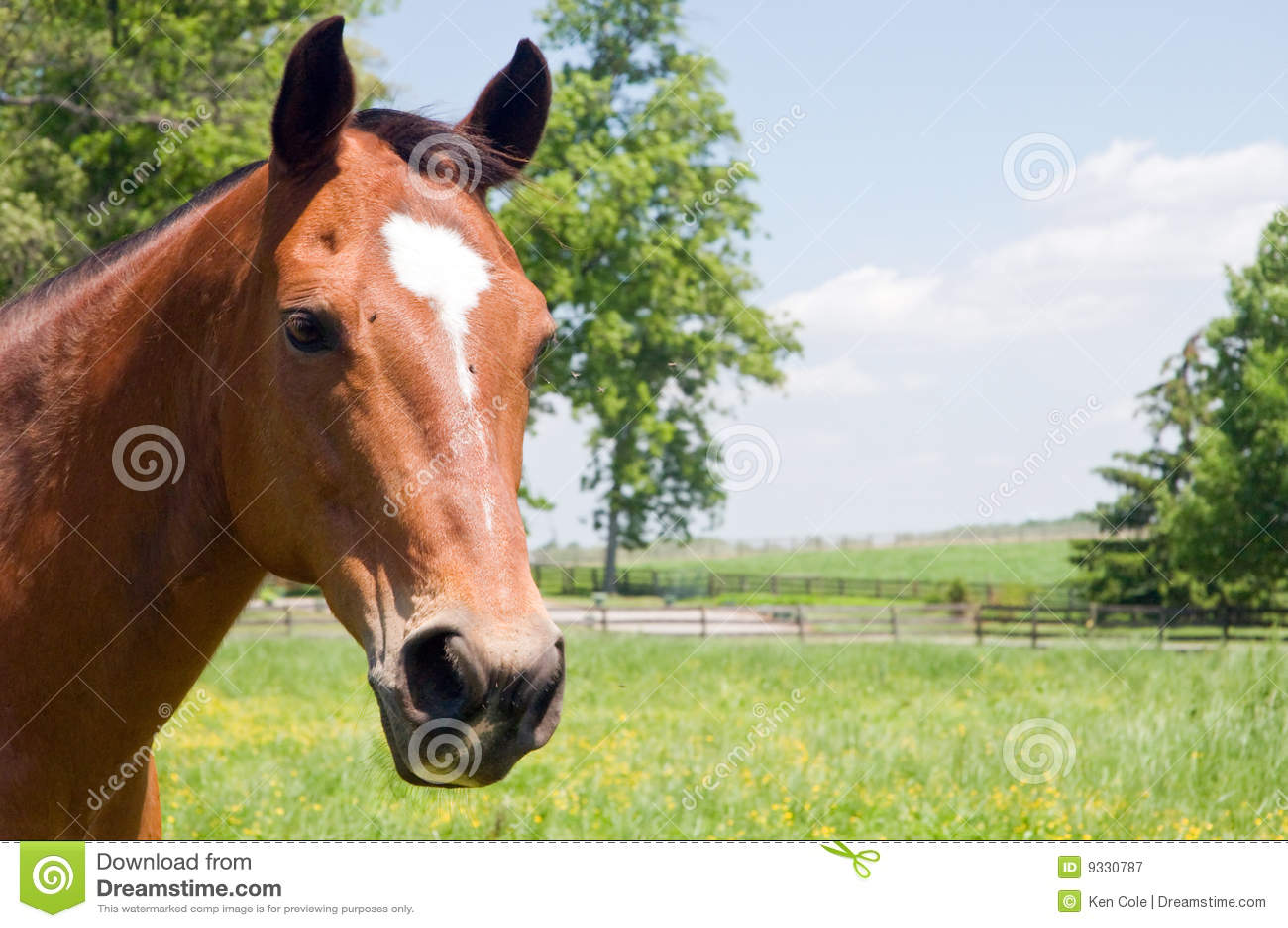 Pista del caballo marrón