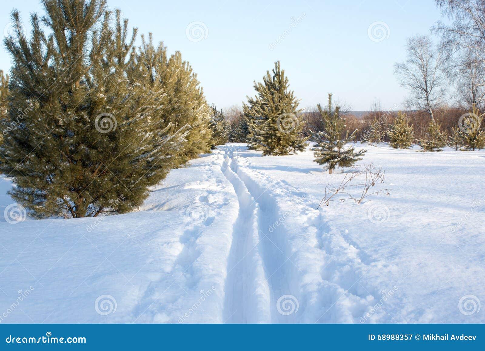 Pista del esquí de la nieve
