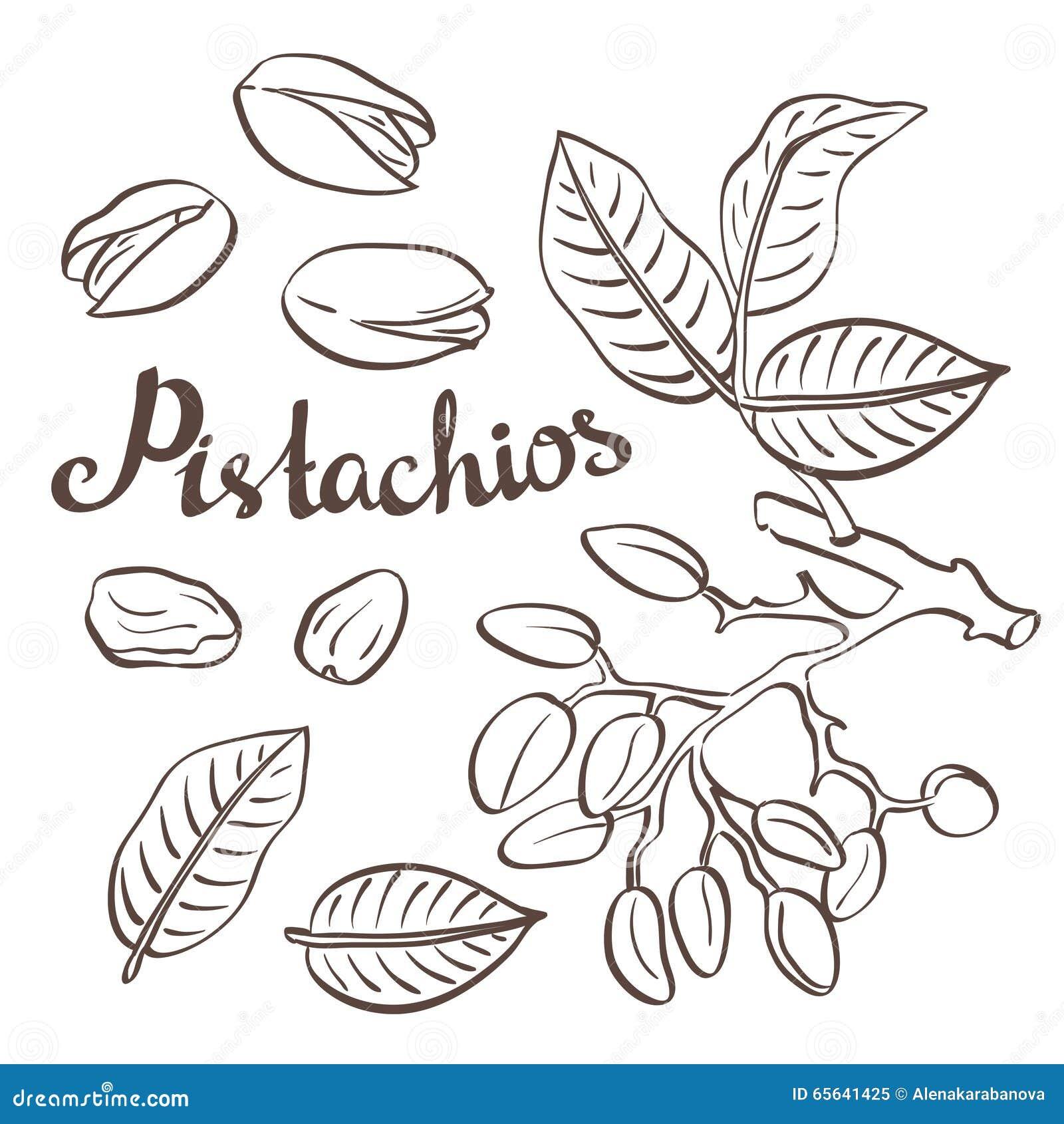 Pistaches avec les feuilles et le pistachier