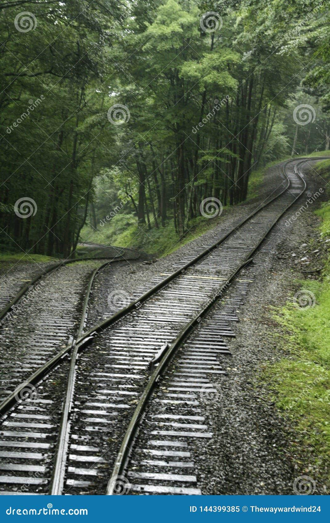 Piste del treno del tracciato nella foresta