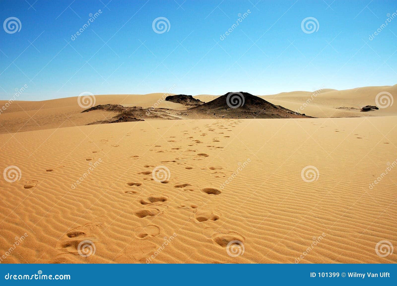 Pistes de chameau
